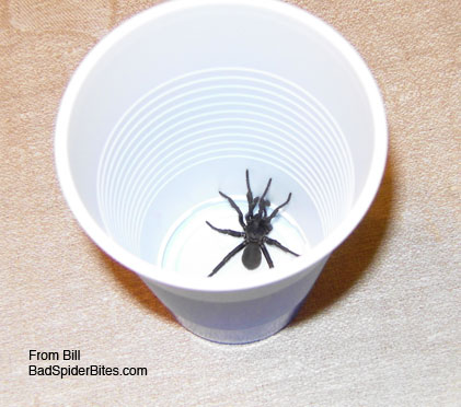 black spider in a cup