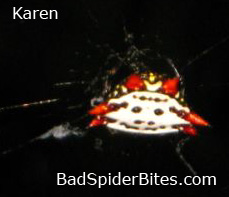 Karen found this spider