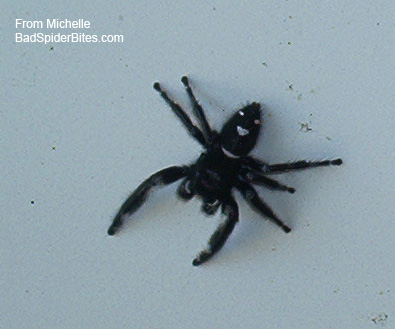 Help Me Identify This Spider Pic Babycenter