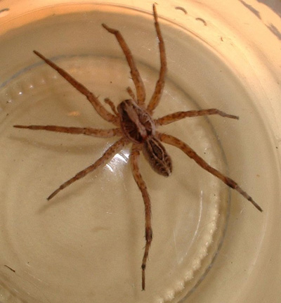 Pennsylvania Wood Spiders http://forums.probetalk.com/showthread.php?t=1701284426