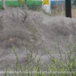 Images of Giant Spider Webs 1 of 4