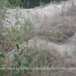 Images of Giant Spider Webs 2 of 4