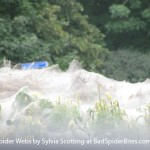 Images of Giant Spider Webs 4 of 4