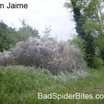 Picture 3 of massive webs in suffolk england